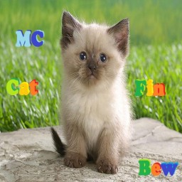 เซิฟ MC-CAT FIN.NET